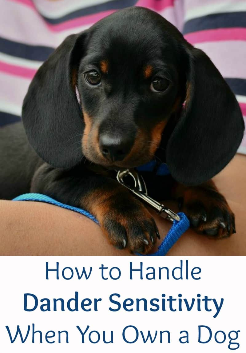 How to Handle Dander Sensitivity When You Own a Dog