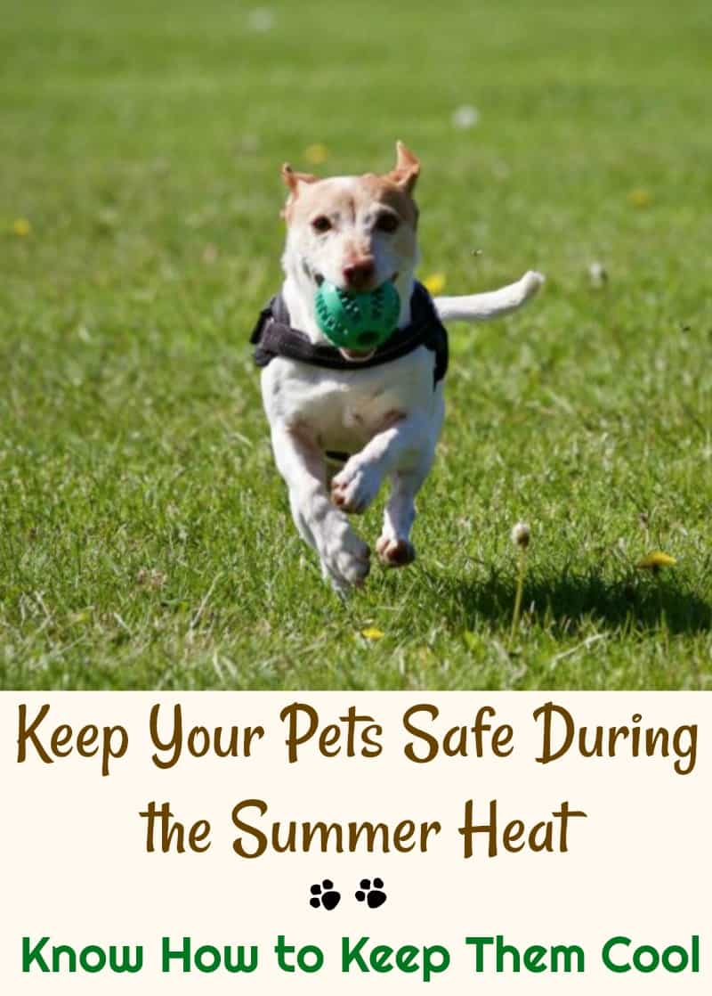 Keep Your Pets Safe During the Summer Heat Know How to Keep Them Cool