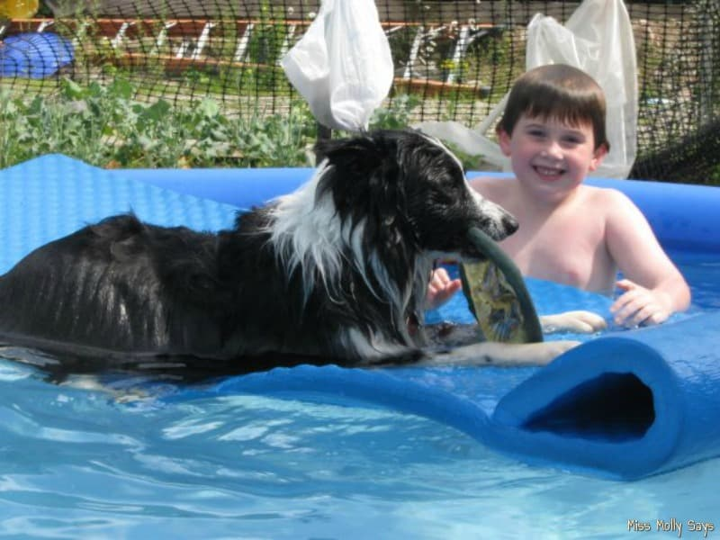 Fun Summer Activities for Dogs - swimming in the pool with their favorite human
