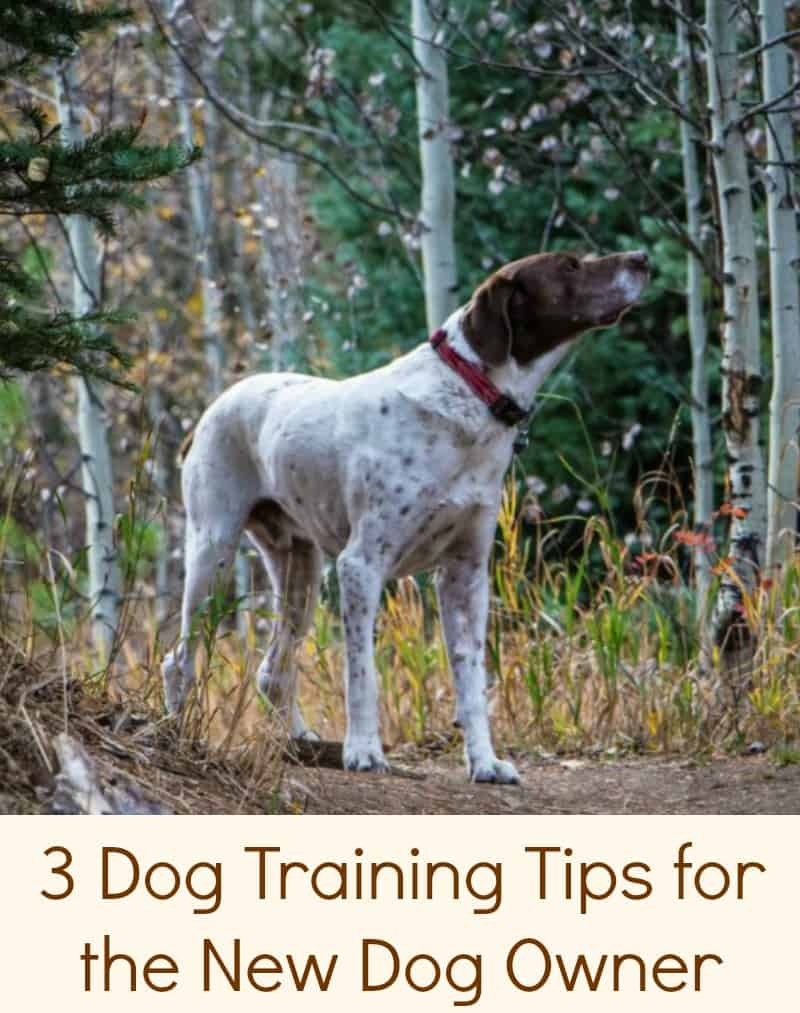 3 Dog Training Tips for the New Dog Owner
