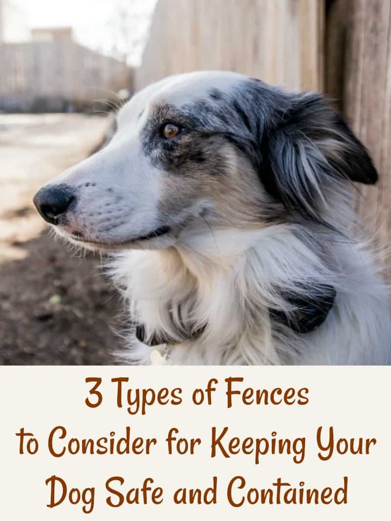 3 Types of Fences to Consider for Keeping Your Dog Safe and Contained