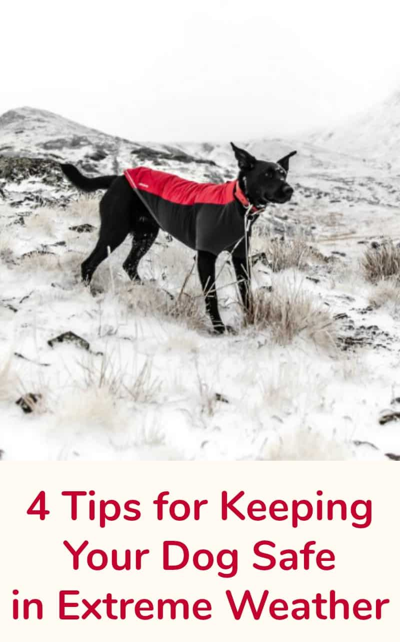4 Tips for Keeping Your Dog Safe in Extreme Weather