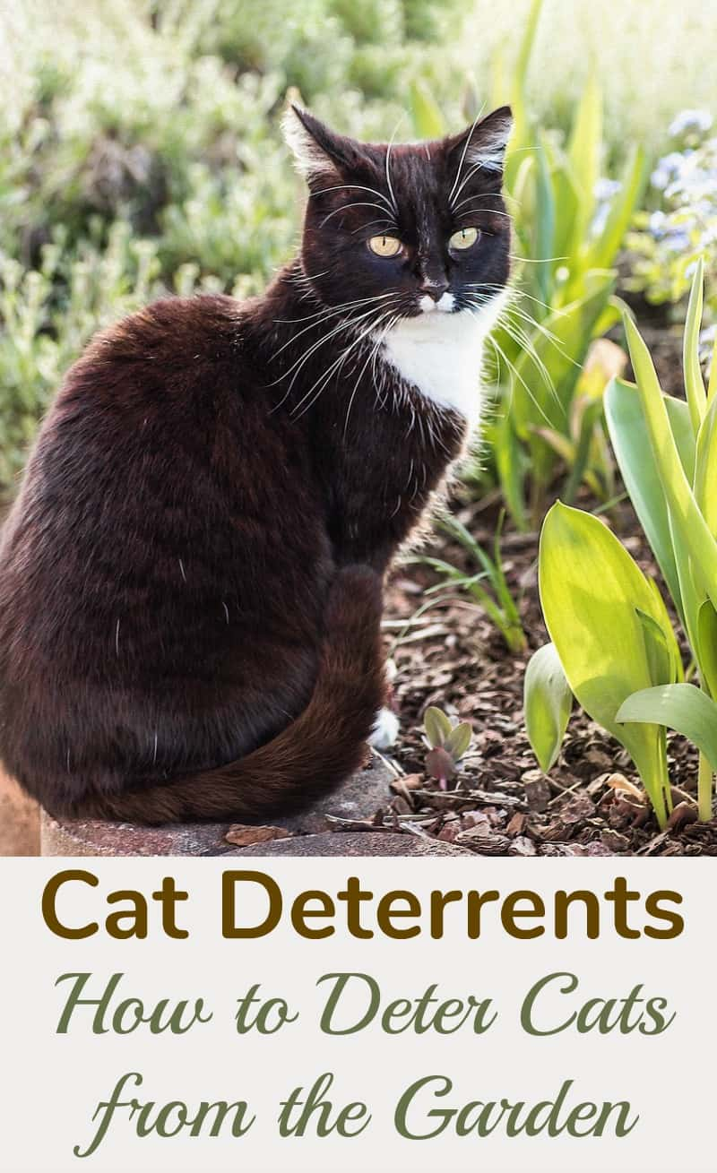 Cat Deterrents: How to Deter Cats from the Garden