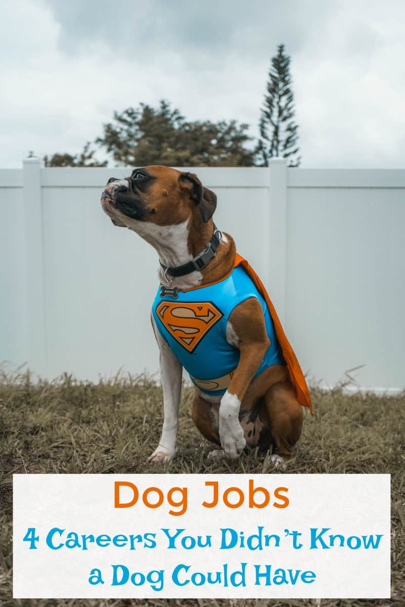 Dog Jobs: 4 Careers You Didn't Know a Dog Could Have