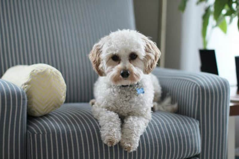 How to Protect Furniture from Dogs