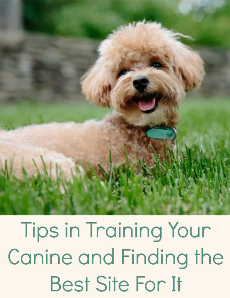 Tips in Training Your Canine and Finding the Best Site For It