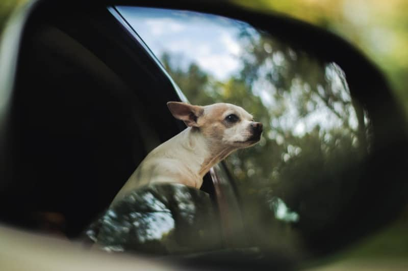 What to Do When You Have a Pet Emergency on the Road