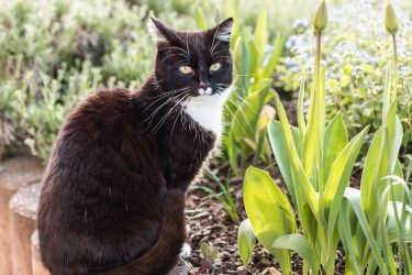 Cat Deterrents: How to Deter Cats from the Garden