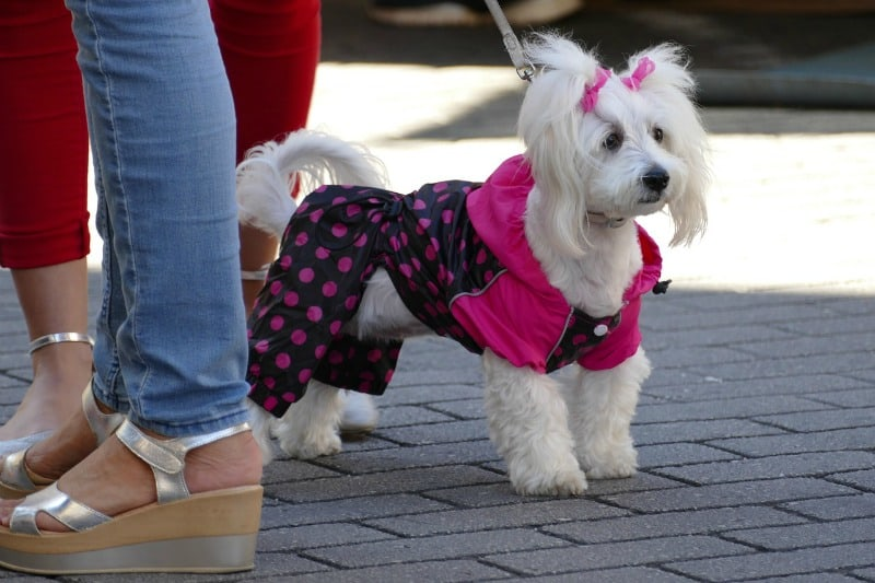 Fighting Off the Cold: Myths and Realities of Dogs and Winter Jackets