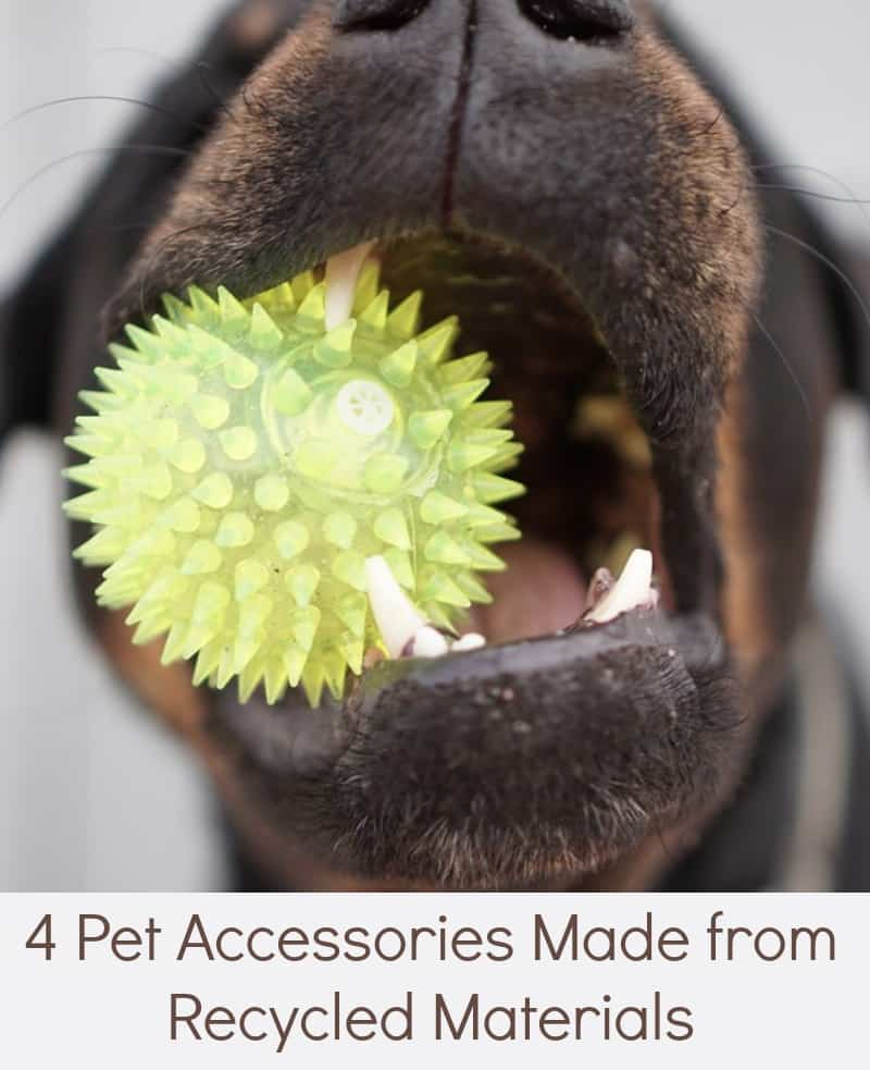 4 Pet Accessories Made from Recycled Materials