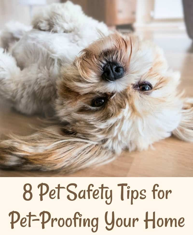 8 Pet Safety Tips for Pet-Proofing Your Home