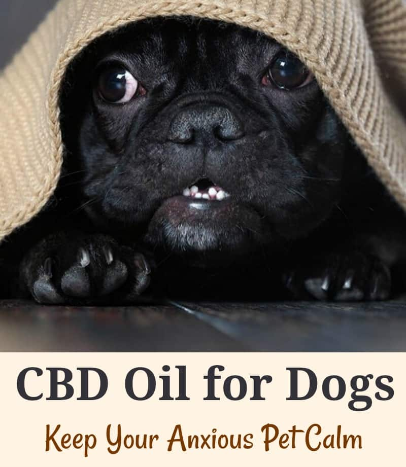 CBD Oil for Dogs: Keep Your Anxious Pet Calm