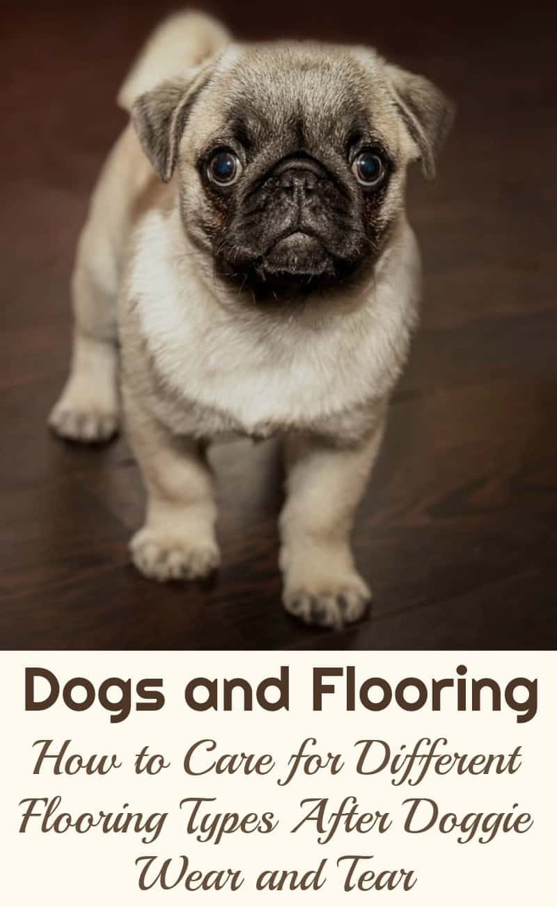Dogs and Flooring: How to Care for Different Flooring Types After Doggie Wear and Tear