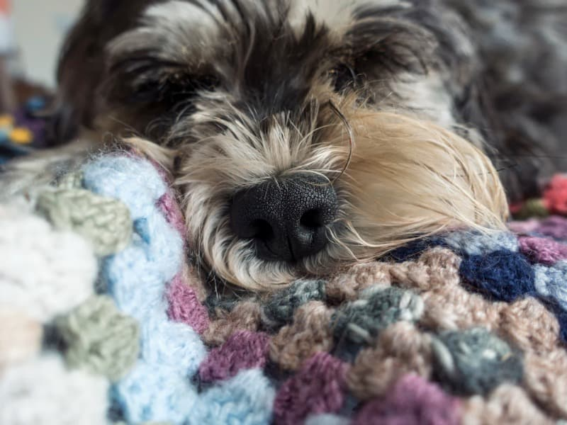 Got Pets? 4 Ways to Deal with the Dander