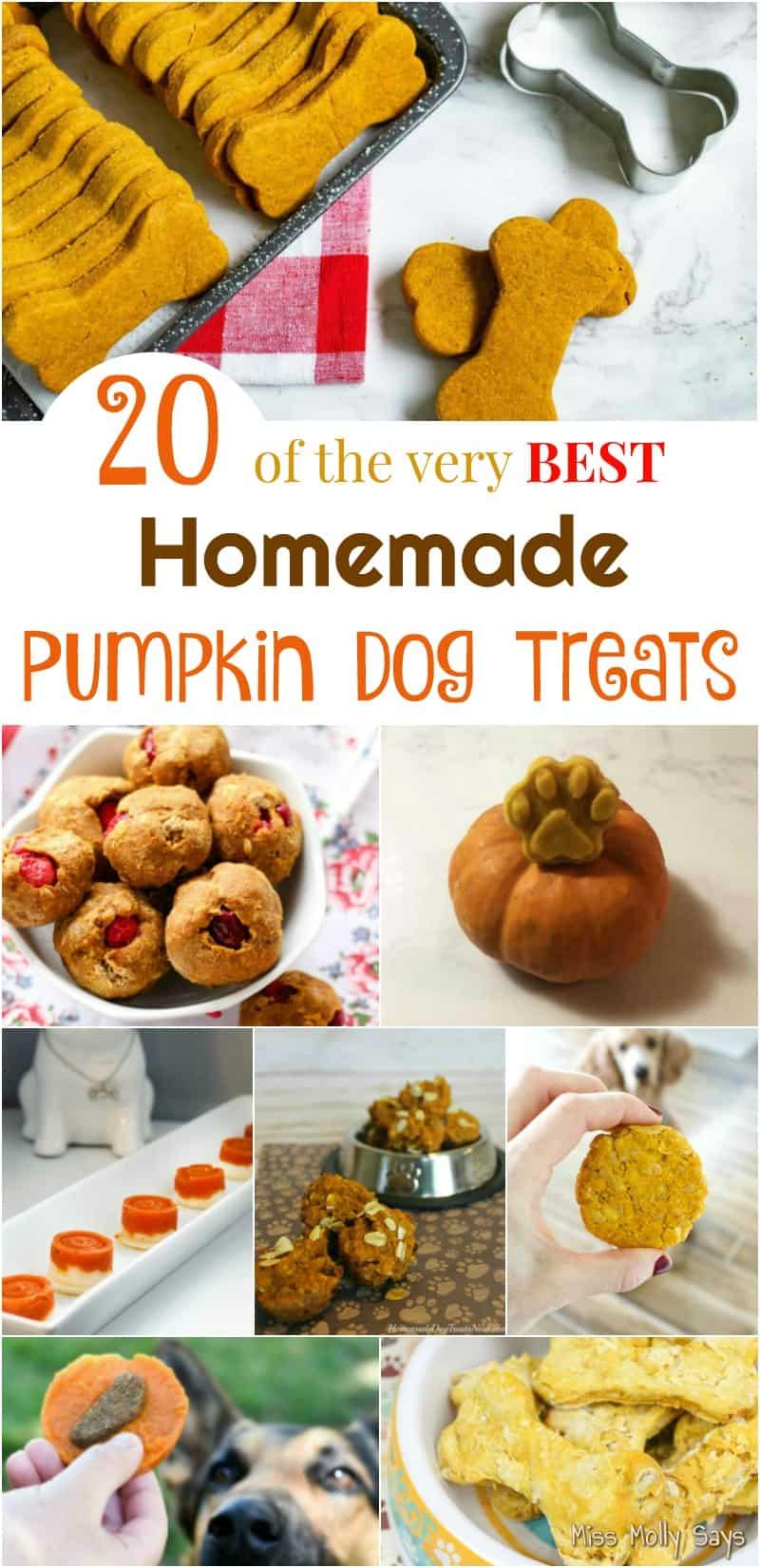 20 of the very Best Homemade Pumpkin Dog Treats