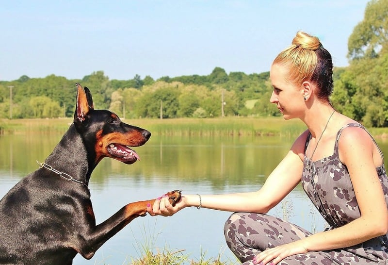 4 Tips for Helping Your Nervous Dog Meet New People