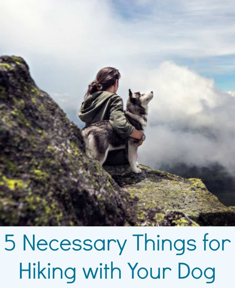 5 Necessary Things for Hiking with Your Dog