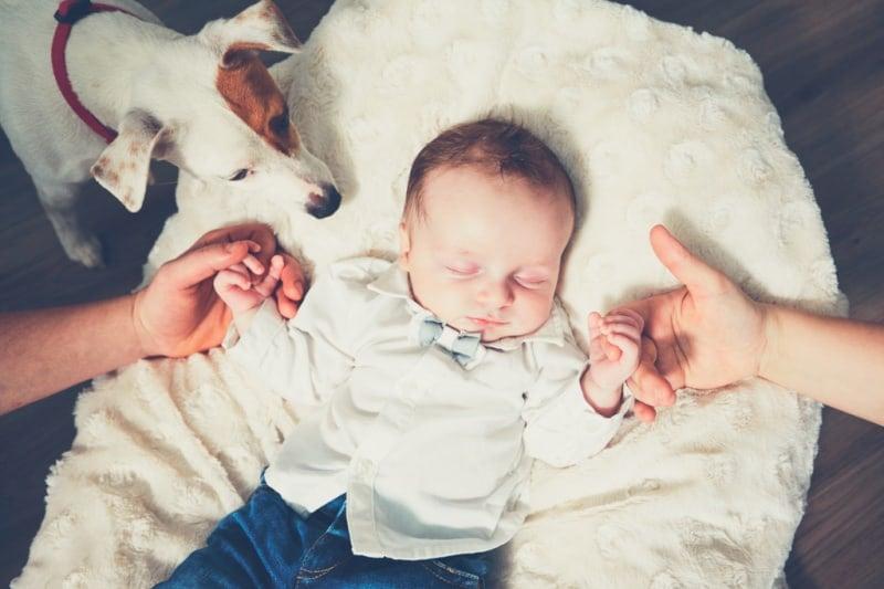 Dog meeting new baby