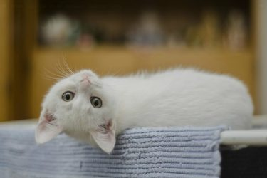 Getting Kittens During the Adopting Crisis? 4 Steps to Prepare Your Home