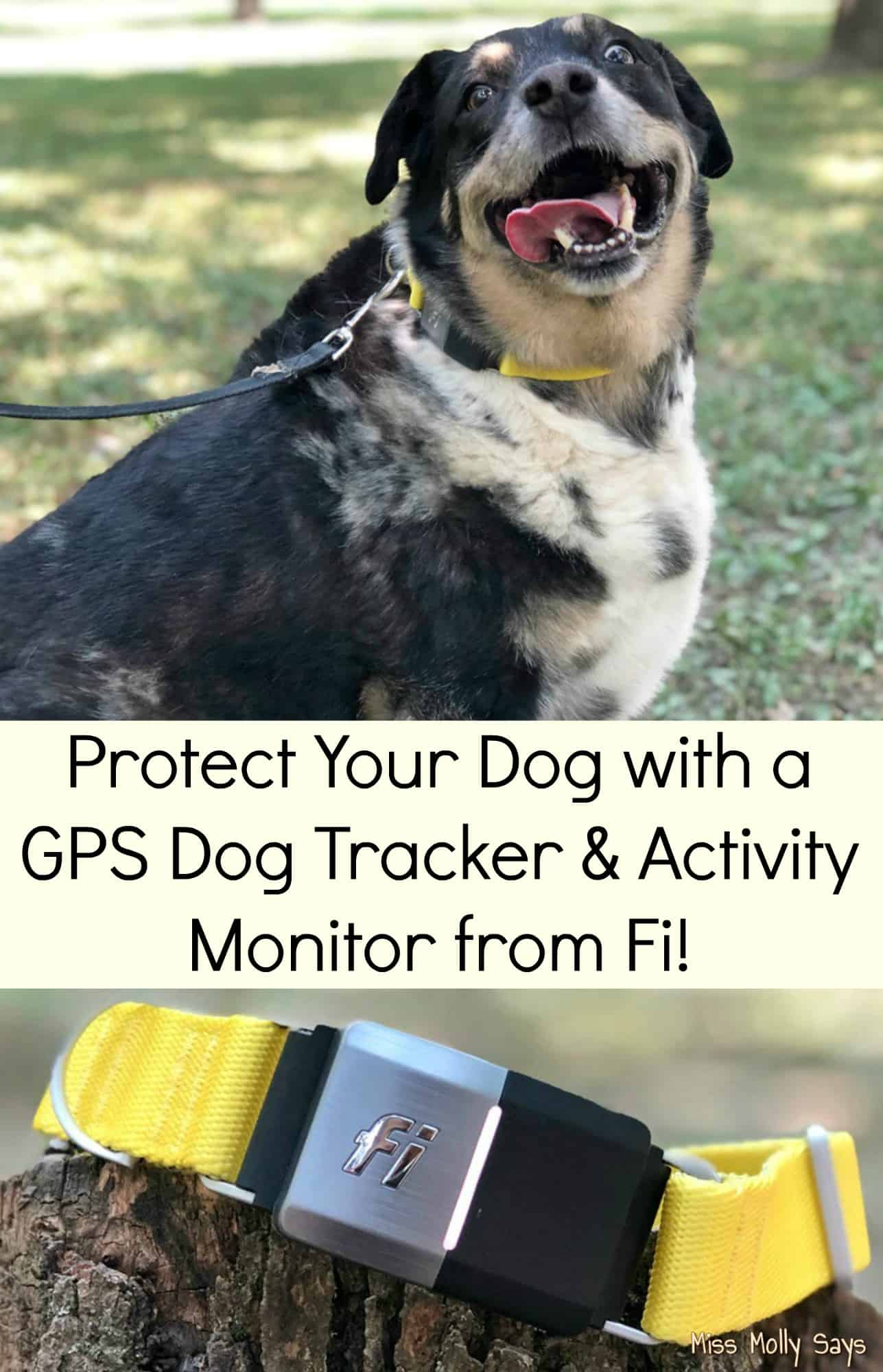Protect Your Dog with a GPS Dog Tracker & Activity Monitor from Fi!