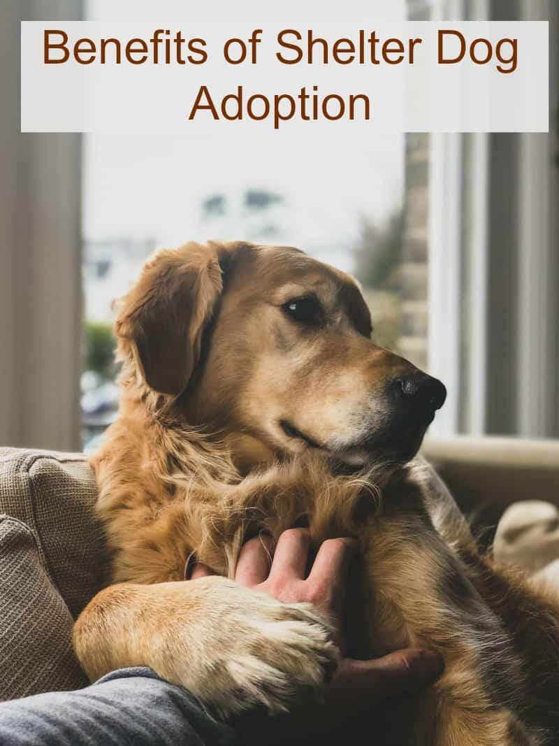 Benefits of Shelter Dog Adoption