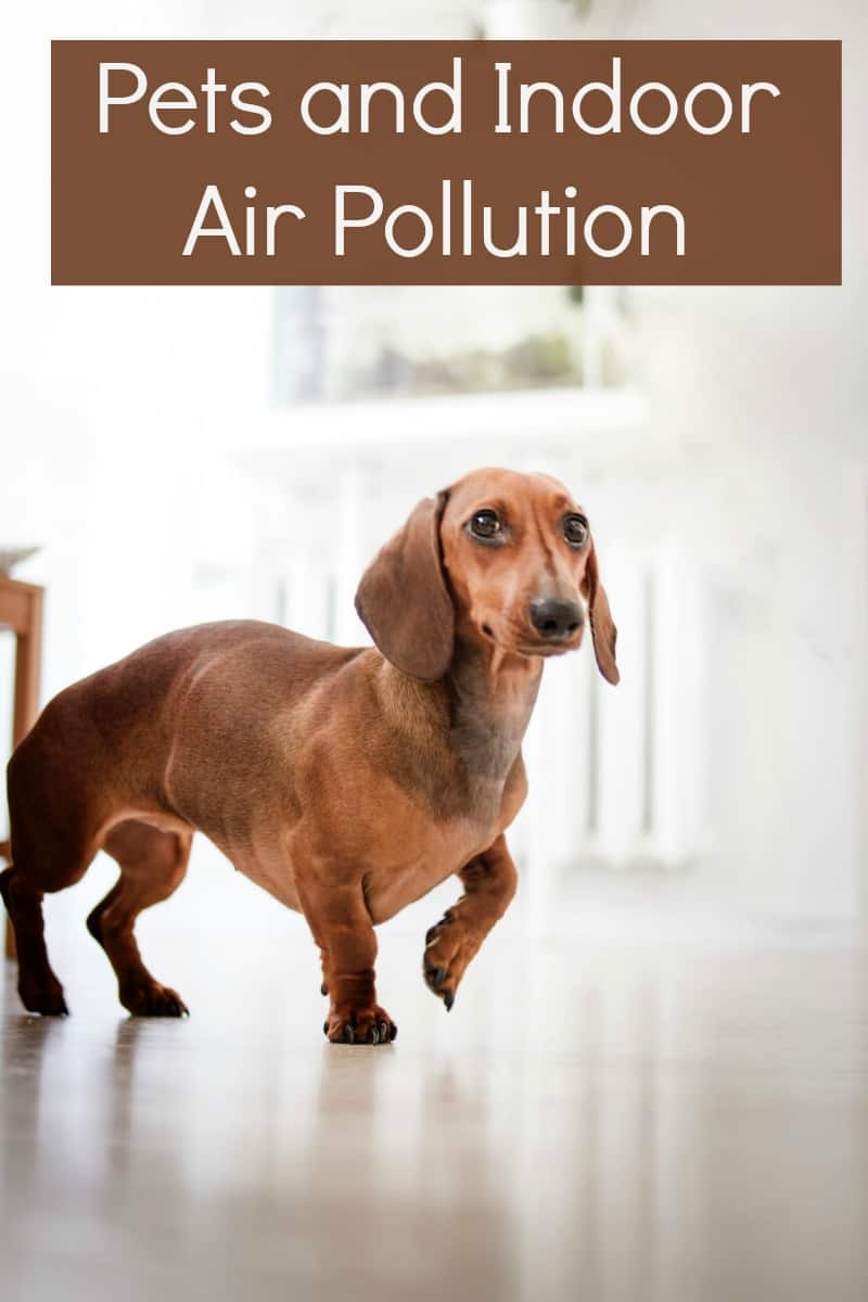 Pets and Indoor Air Pollution