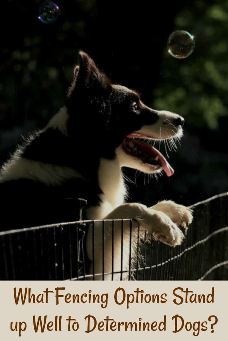 What Fencing Options Stand up Well to Determined Dogs?
