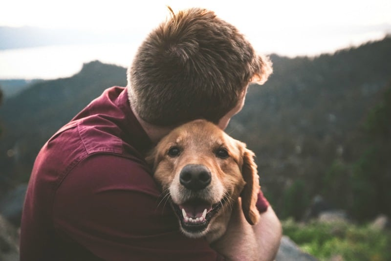 brown dog being hugged by man