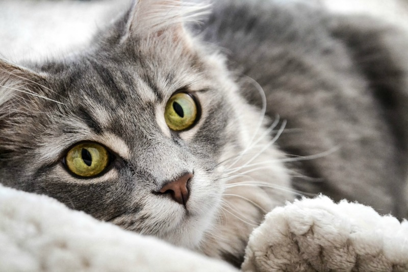The Pros and Cons of Feeding Hairball Control Cat Food