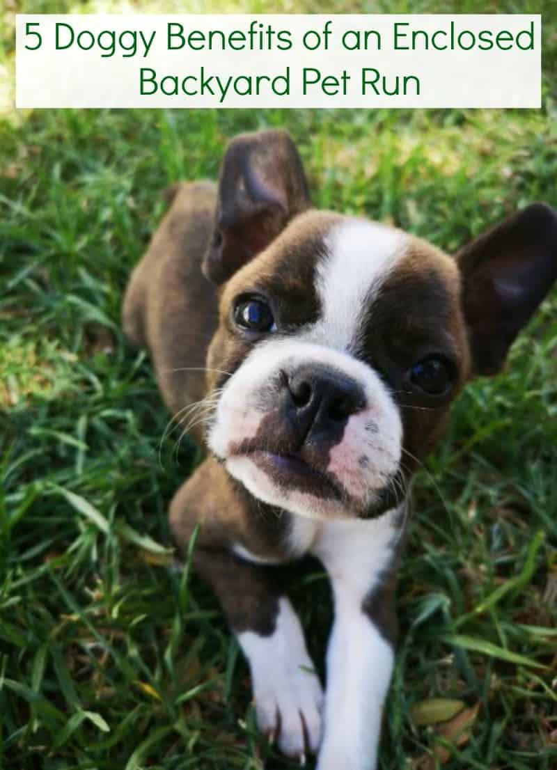 5 Doggy Benefits of an Enclosed Backyard Pet Run