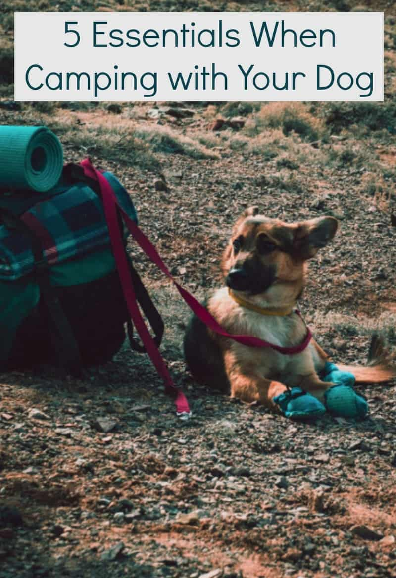 5 Essentials When Camping with Your Dog