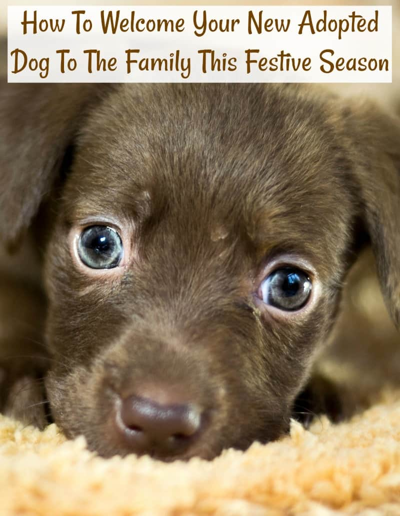 How To Welcome Your New Adopted Dog To The Family This Festive Season