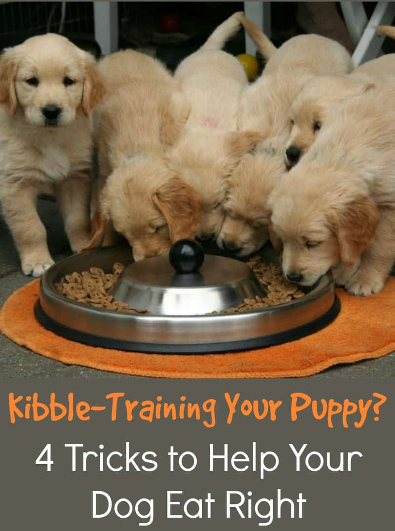 Kibble-Training Your Puppy? 4 Tricks to Help Your Dog Eat Right