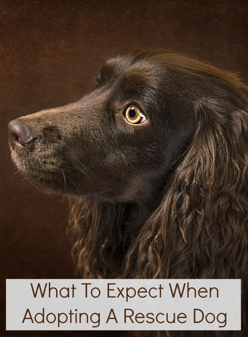 What To Expect When Adopting A Rescue Dog