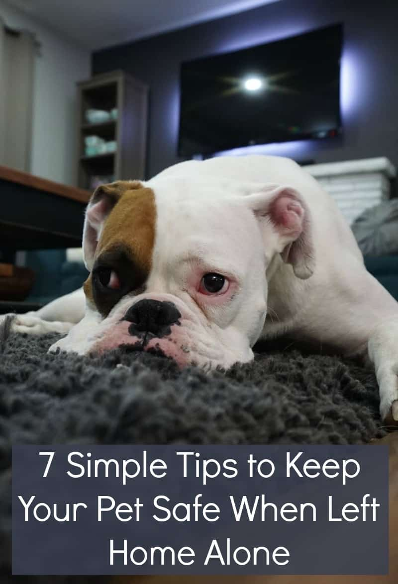 7 Simple Tips to Keep Your Pet Safe When Left Home Alone
