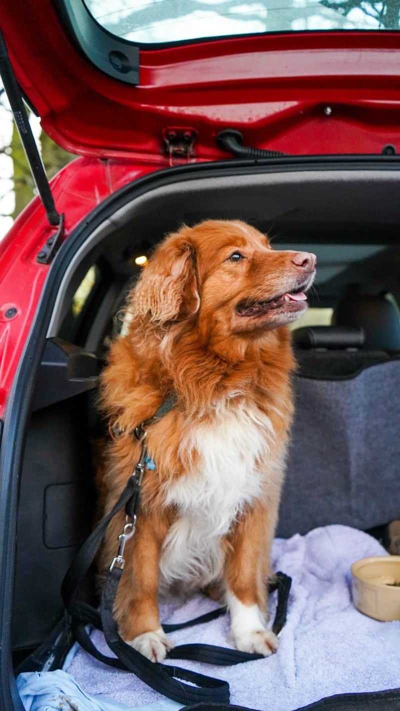 8 Car Safety Hints for Dogs