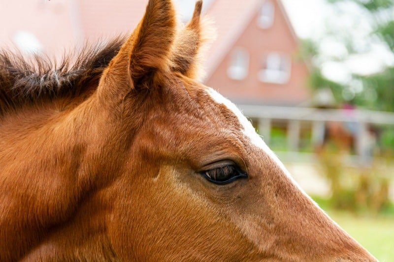 CBD and Horses: Everything You Need to Know