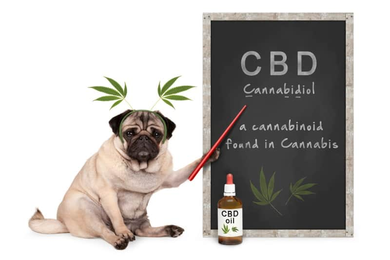 CBD and How It Can Help Your Pet Dog