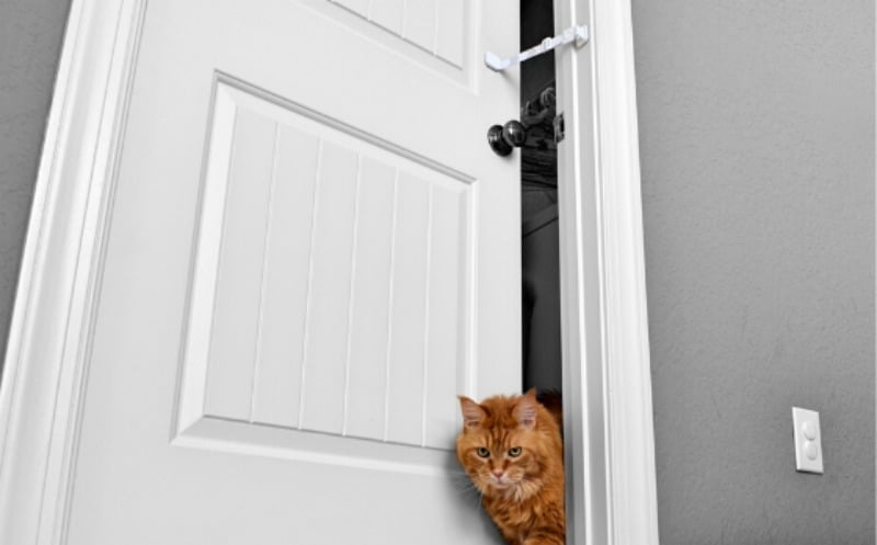 Pet Proofing the Kitty Litter with Door Buddy