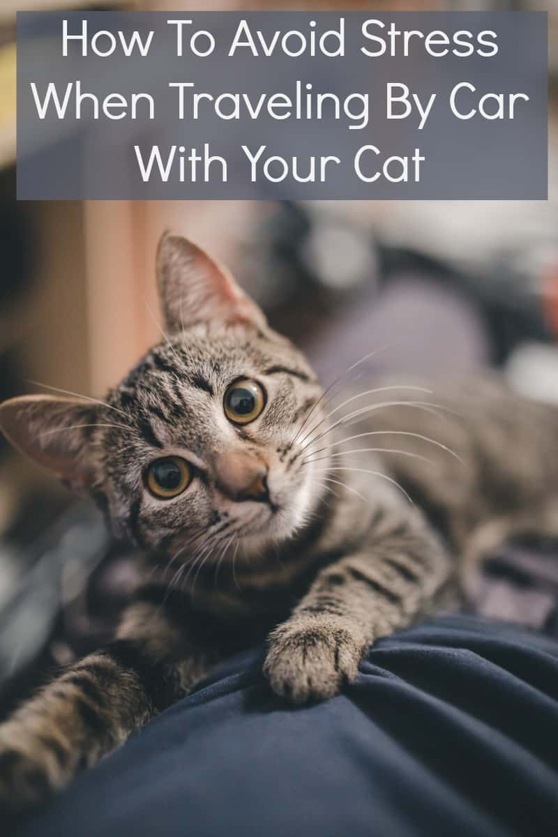 How To Avoid Stress When Traveling By Car With Your Cat