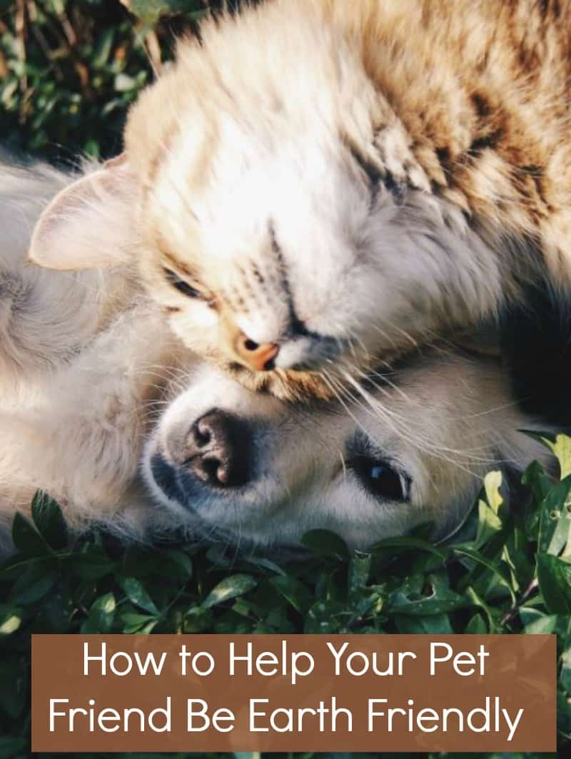 How to Help Your Pet Friend Be Earth Friendly