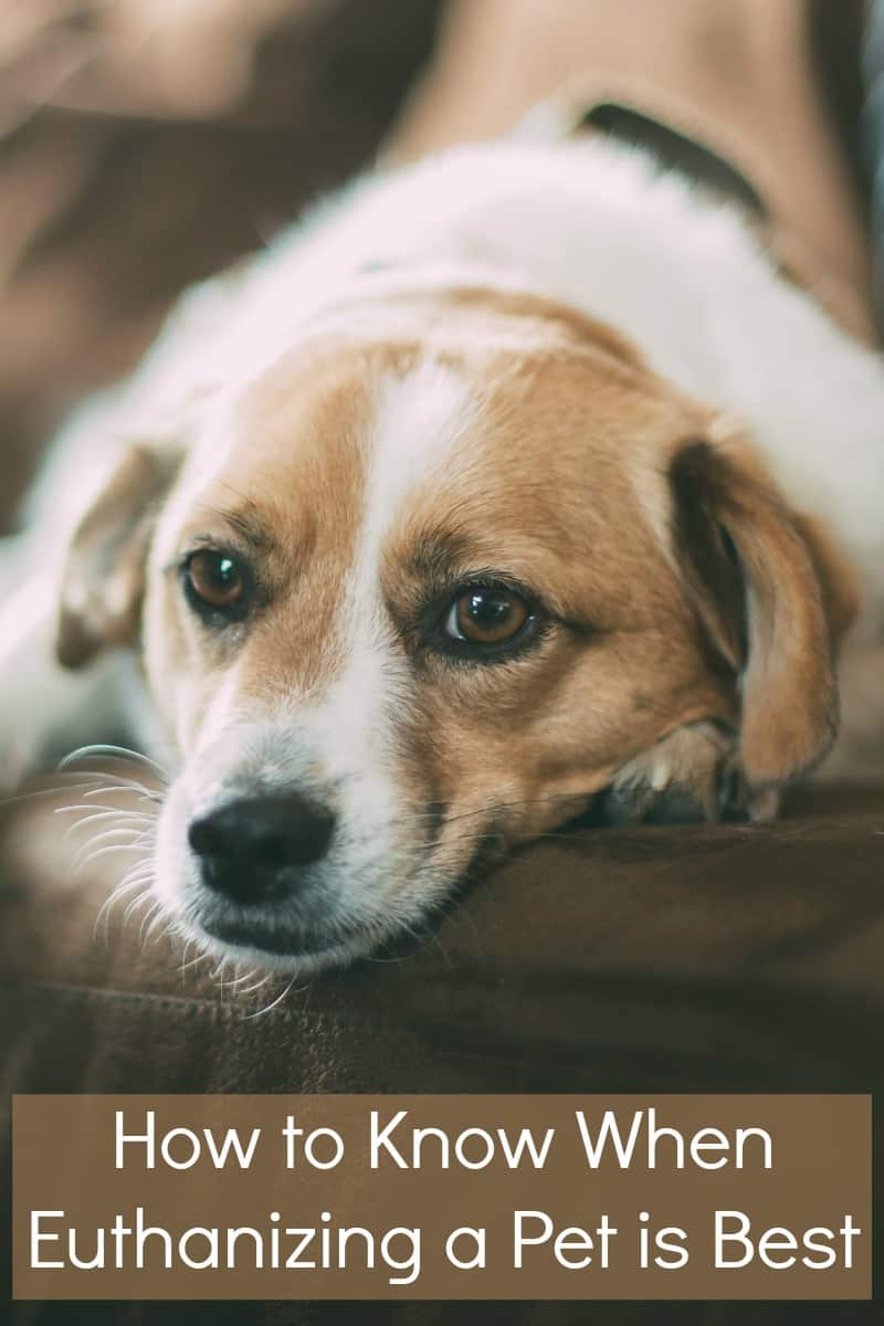 How to Know When Euthanizing a Pet is Best