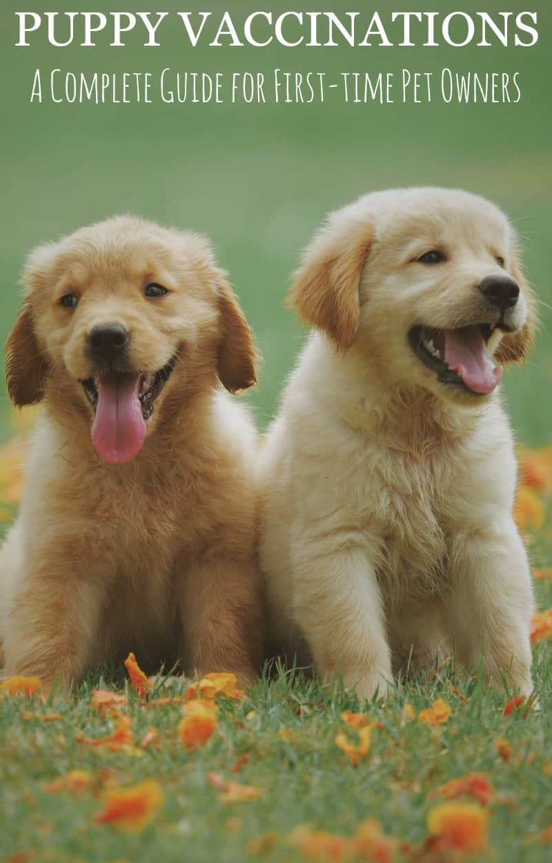 Puppy Vaccinations: A Complete Guide for First-time Pet Owners