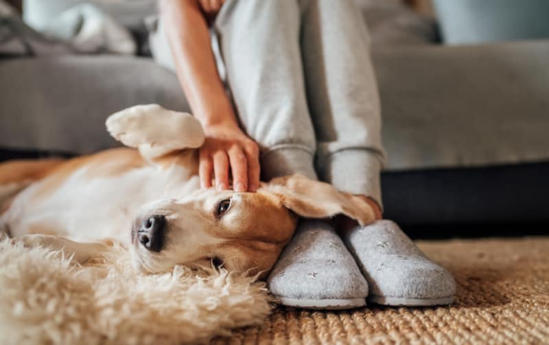 Dog laying by a woman's slippered feet