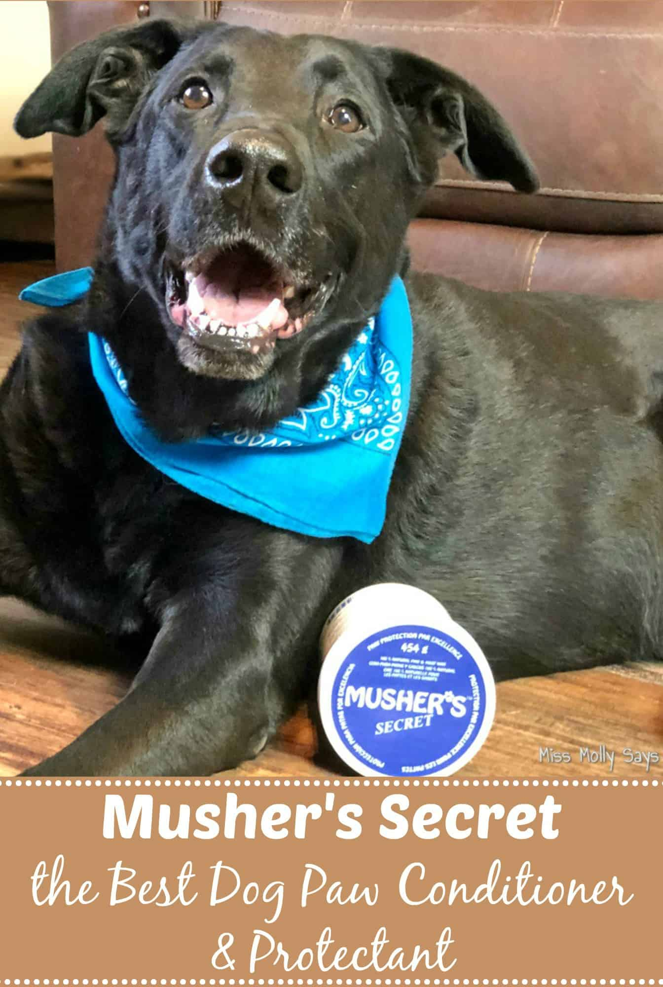 Musher's Secret is the Best Dog Paw Conditioner & Protectant