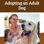 What are the Advantages of Adopting an Adult Dog