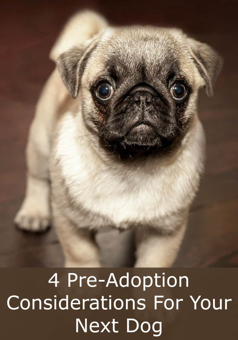4 Pre-Adoption Considerations For Your Next Dog
