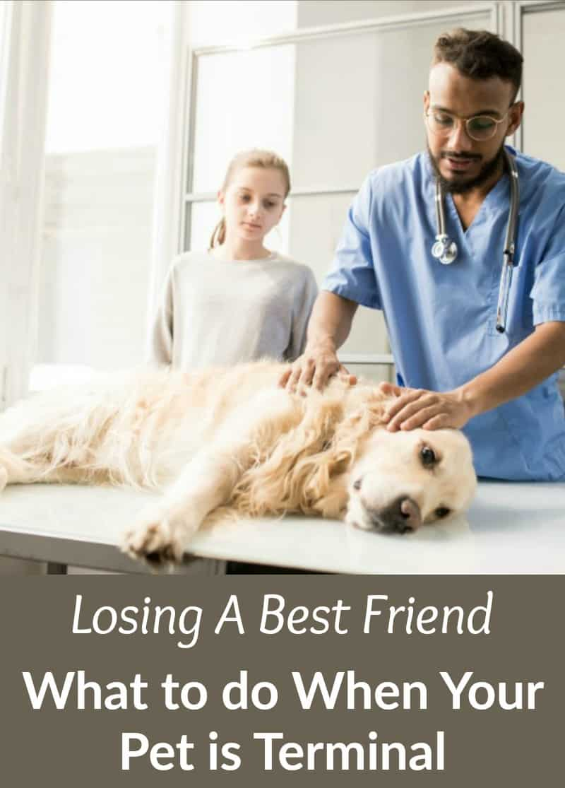 Losing A Best Friend: What to do When Your Pet is Terminal