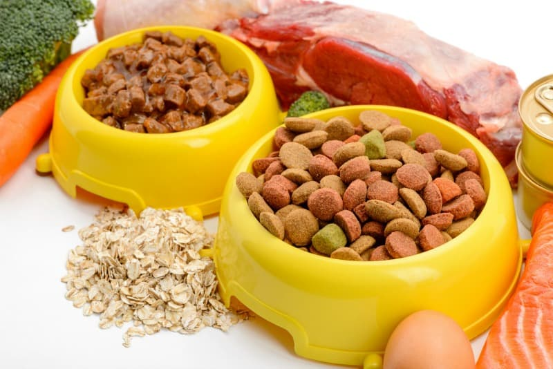 Pet Nutrition: Main Difference Between Dry And Wet Pet Food
