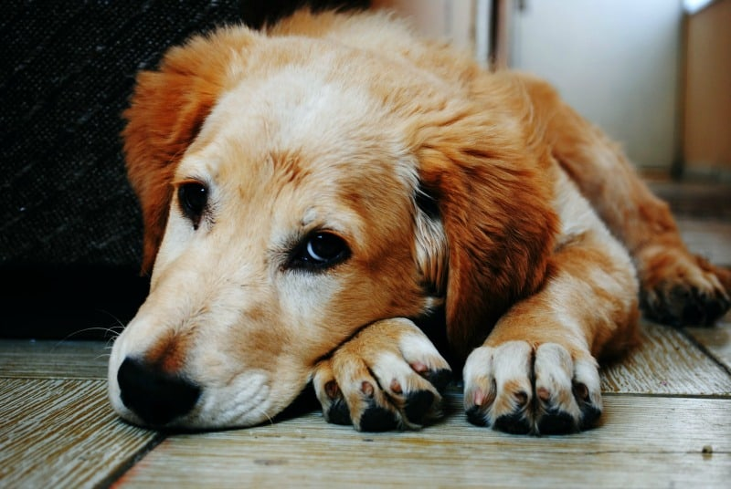 7 Facts You May Not Know About Dog Anxiety